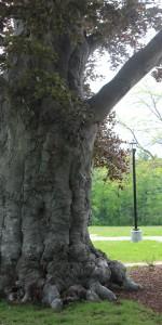 Sachem Rock Farm Tree trunk